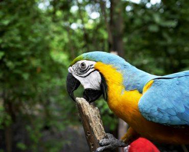 Leacul pentru dezamăgire - papagalul cu un singur picior -