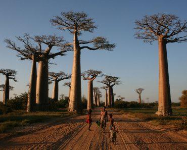 Jurnal de Rugăciune Wycllife: Ciuma pneumonică face ravagii în Madagascar