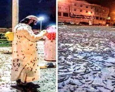Mecca: invazie masivă de lăcuste şi gândaci în locul cel mai sfânt al islamului