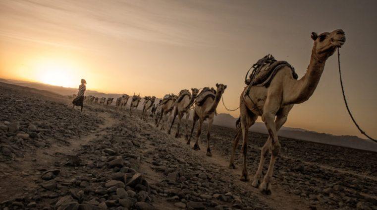 Ziua a 10-a: Poporul Afar din Djibouti. Lapte de cămilă în deșert | #Pray30Days